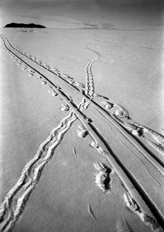Tracks in the snow of an Adelie penguin crossing the path of a sledge track. Photo: Popperfoto, H.G. Pointing/Terra Nova / Popperfoto