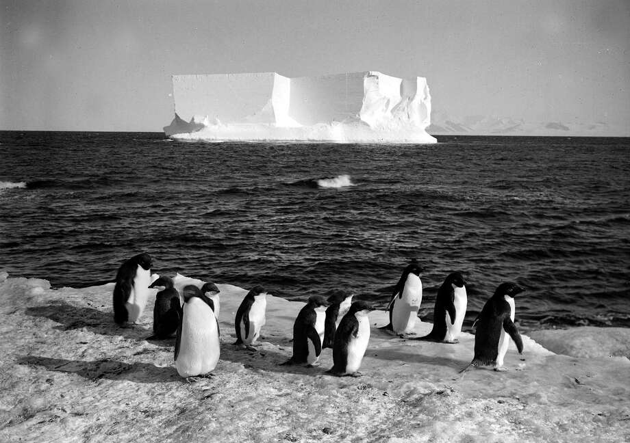 Penguins and an ice berg at Cape Royds. Photo: Popperfoto, H.G. Pointing/Terra Nova / Popperfoto