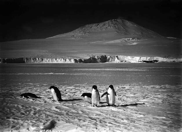 Penguins standing on the ice in front of Mount Erebus. Photo: Popperfoto, H.G. Pointing/Terra Nova / Popperfoto