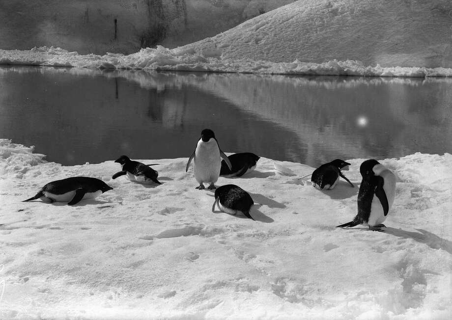 Penguins resting on the ice. Photo: Popperfoto, H.G. Pointing/Terra Nova / Popperfoto