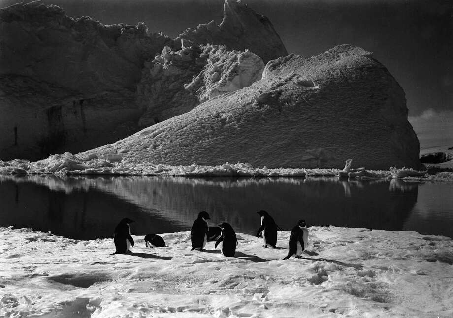 Penguins resting on the ice in front of a large iceberg. Photo: Popperfoto, H.G. Pointing/Terra Nova / Popperfoto