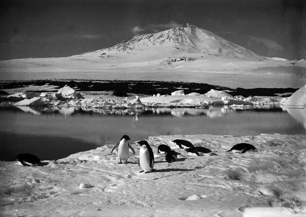 Adelie penguins resting on the ice with Mount Erebus and open water near the grotto iceberg in the background. Photo: Popperfoto, H.G. Pointing/Terra Nova / Popperfoto