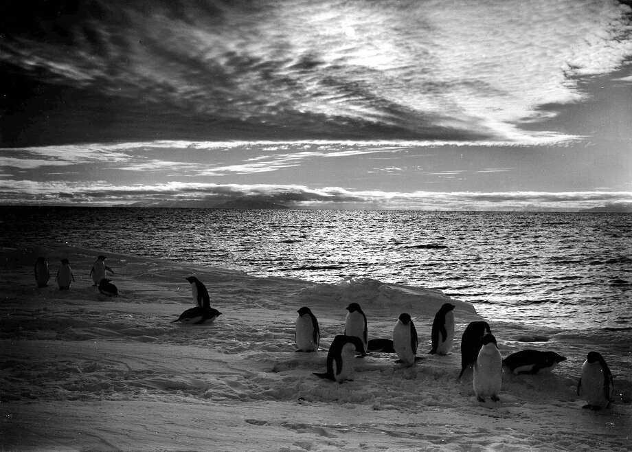 Penguins standing at the ice edge under a gloomy sky at the time of the midnight sun. Photo: Popperfoto, H.G. Pointing/Terra Nova / Popperfoto