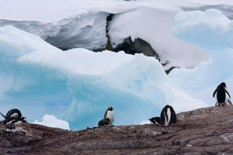 Penguins in Antarctica, photographed by timesunion.com Executive Producer Paul Block during a trip in December 2007. Photo: Paul Block