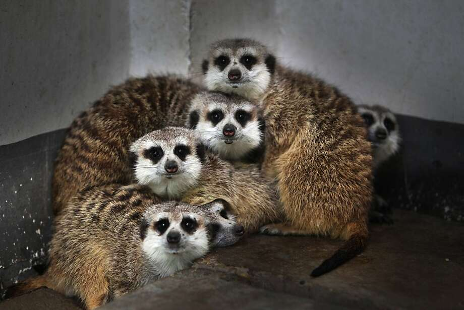 There, that's better: (Changshang Ecological Zoo in Changsha, China's Hunan province.) Photo: Stringer, AFP/Getty Images