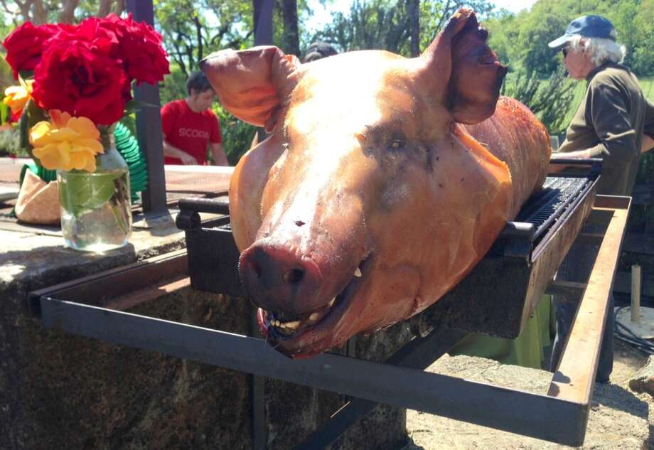 The pig at the Iron Horse Earth Day celebration