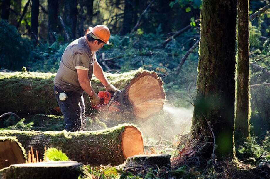 2. Lumberjack  Salary Median: $32,870 Projected Job Growth: 4%
