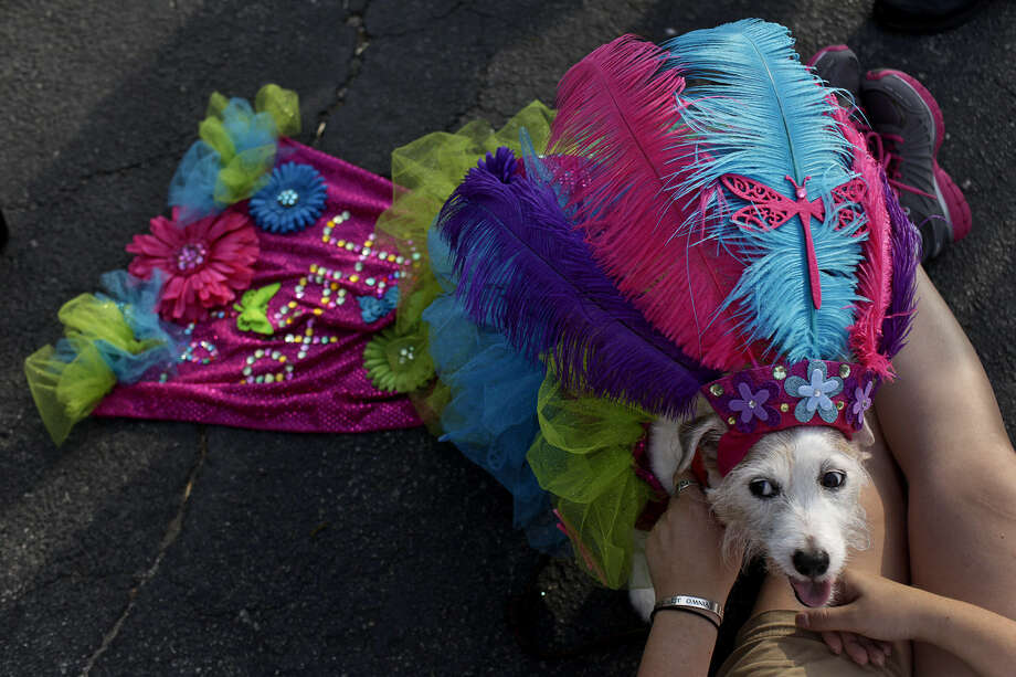 Costumes are encouraged, but give your pet an occasional break from heavy or hot accessories.