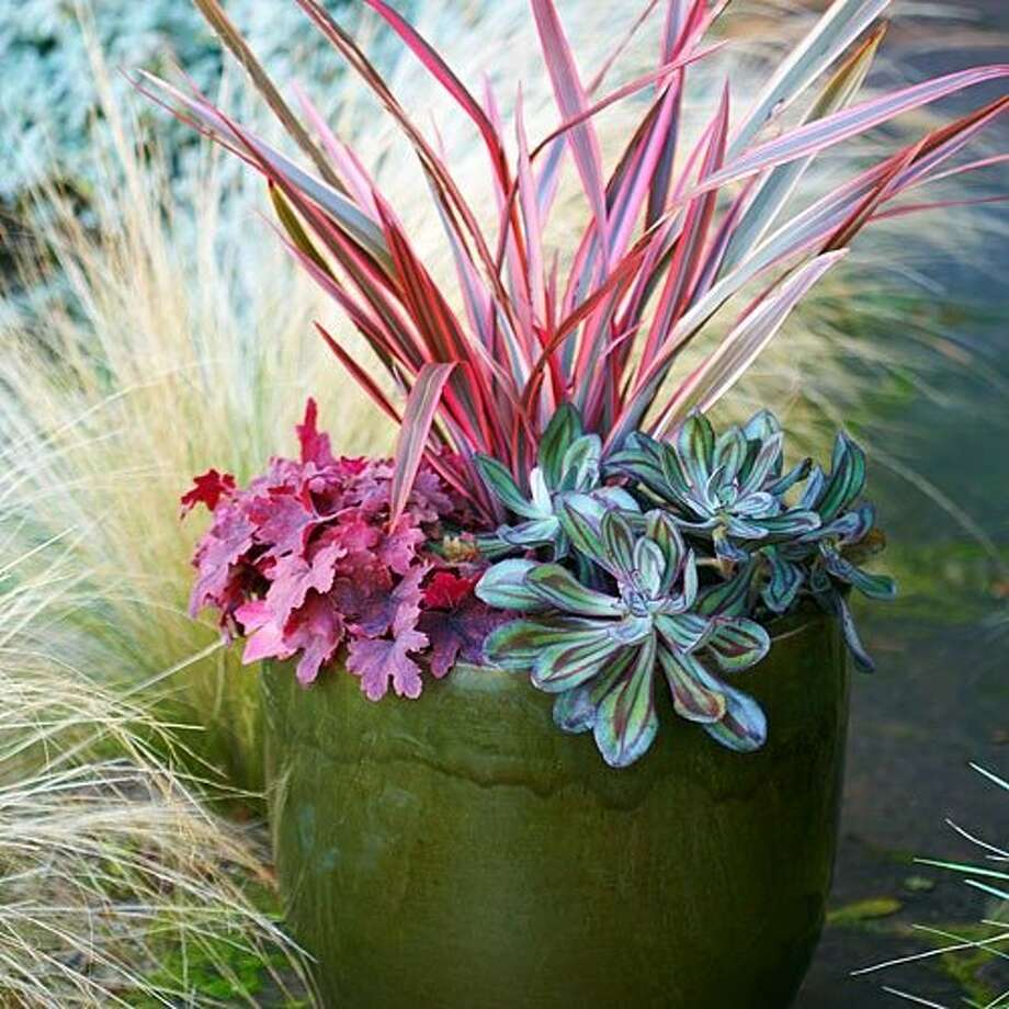 Create an instant mini-garden Start with the plants, then pick a container that will extend the color theme. Here, a 16-inch-wide olive green pot makes the brighter foliage pop.