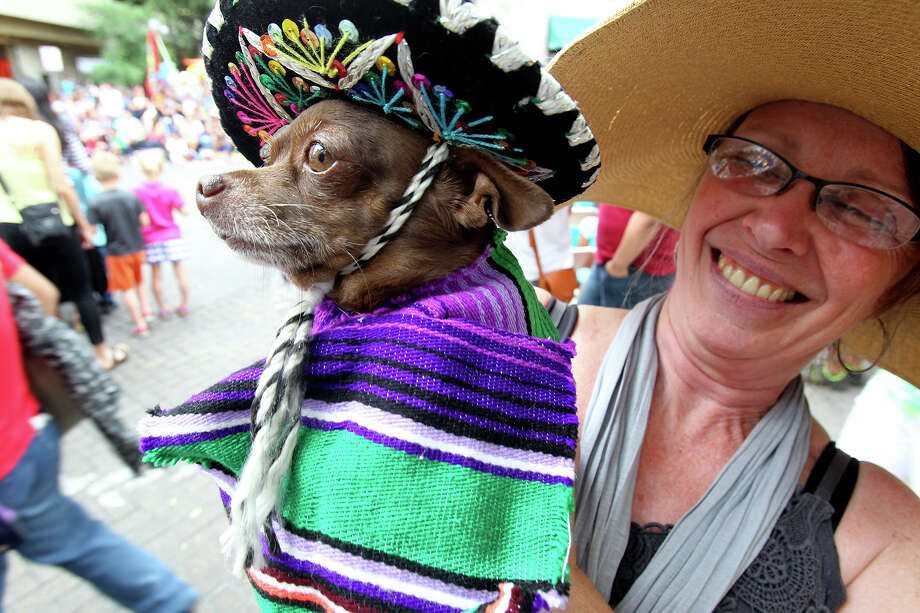 """Margie Beecher holds """"Ranger"""" who is all decked out for Fiesta as the Battle of Flowers Parade moves through the downtown area  on  April 26 2013. Photo: TOM REEL"""