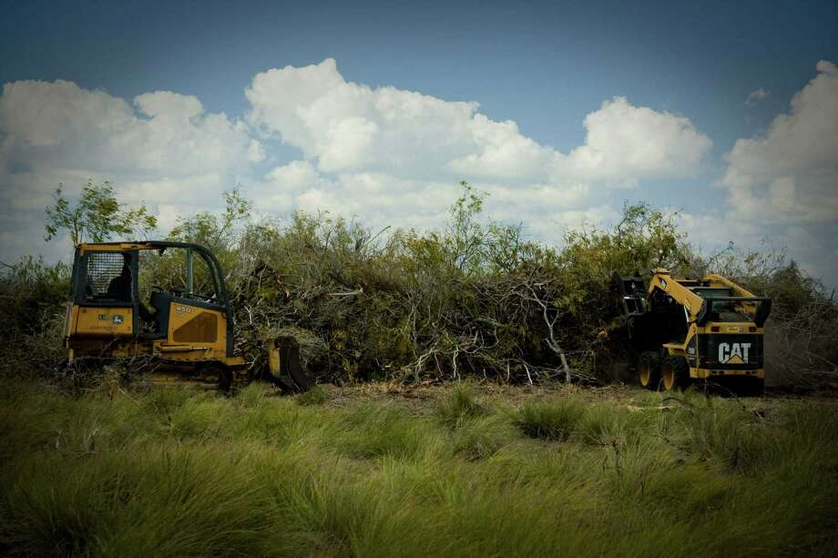 Mesquite is harvested about 40 miles from Corpus Christi. A Czech Republic company, GreenHeart Energy LLC, based in San Antonio, will begin harvesting mesquite near Corpus to ship to European utilities to burn at power plants. Photo: Photos Courtesy GreenHeart Energy LLC