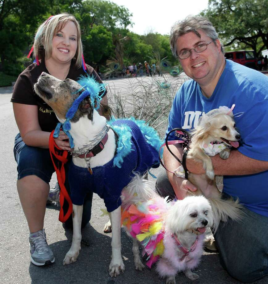 FEATURES; ACS FIESTA POOCH JMS; 04/16/11; From the left, Anissa Hart and Chris Walker with Bella, Lola and Goose at the Fiesta Pooch Parade, Saturday, April 16, 2011 at the Alamo Heights Swimming Pool in San Antonio. ( Photo by J. Michael Short / SPECIAL ) Photo: J. Michael Short, SPECIAL TO THE EXPRESS-NEWS / THE SAN ANTONIO EXPRESS-NEWS