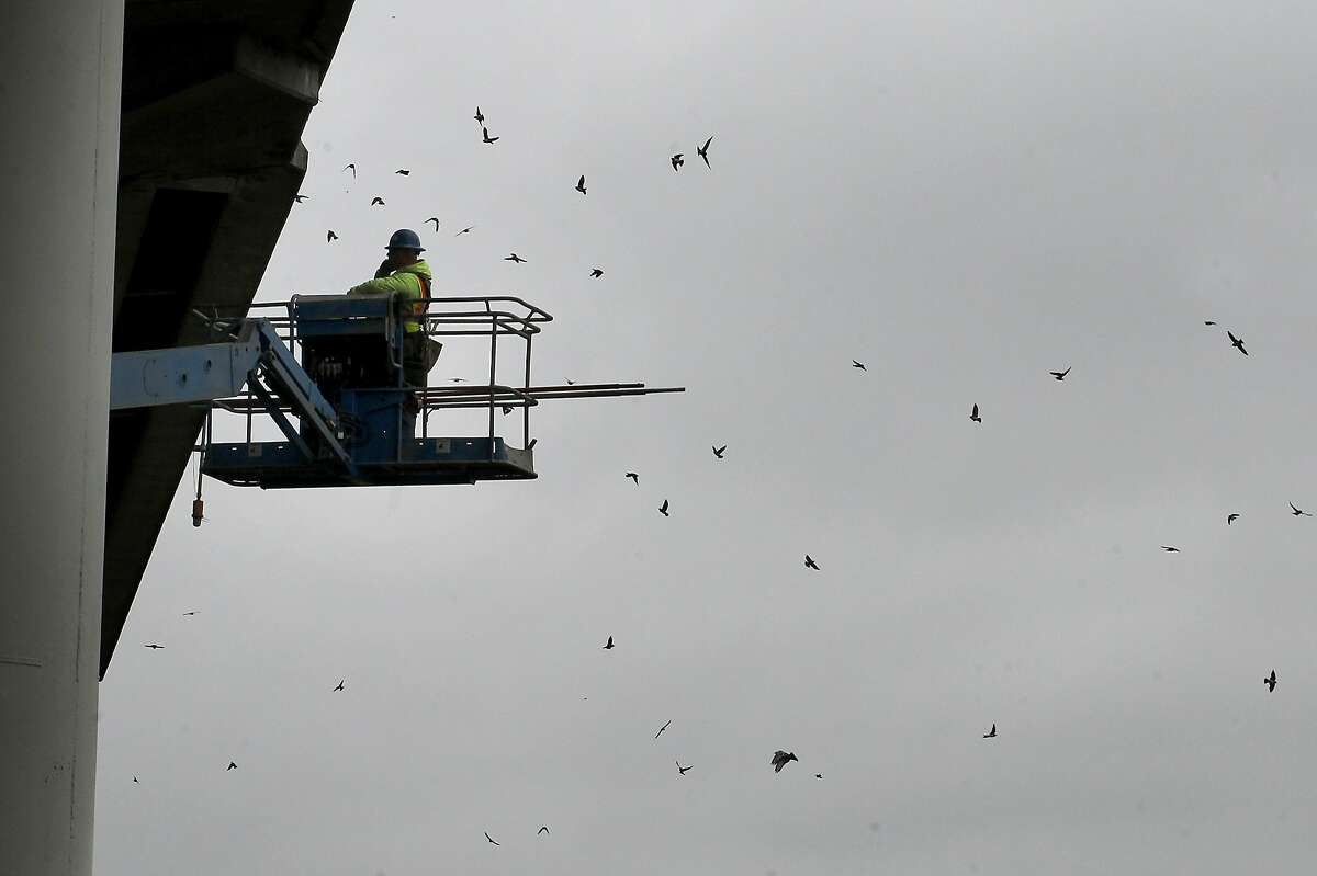 A worker with CC Myers uses a cherry picker to watch swallows as they swarm around the bridge Thursday April 25, 2013. A CalTrans contractor, CC Myers, is trying to stop swallows from nesting beneath the Petaluma River Bridge, but songbird advocates say the netting is harming the birds who have nested there for years.