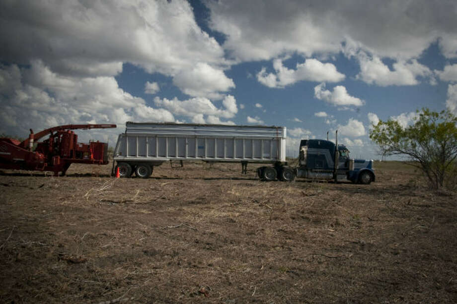 A truck is loaded with chipped mesquite wood in a field about 40 miles from Corpus Christi. A Czech Republic company, GreenHeart Energy LLC, based in San Antonio, will begin harvesting mesquite near Corpus Christi to ship to European utilities to burn at electric power plants. Photo: GREENHEART