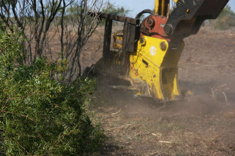 Mesquite is being harvested on property about 40 miles from Corpus Christi. A Czech Republic company, GreenHeart Energy LLC, based in San Antonio, will begin harvesting mesquite near Corpus Christi to ship to European utilities to burn at electric power plants. Photo: GREENHEART