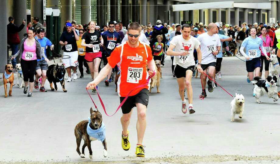 "The Danbury Animal Welfare Society's ""Run Your Tail Off 5K"" road race took place at the Matrix Center in Danbury, Conn. Sunday, April 28, 2013. Runners ran with their dogs as a fundraiser to support DAWS no kill shelter. Eric Morse, number 247, right center, and his dog, Murdock, won the race. Photo: Michael Duffy / The News-Times"
