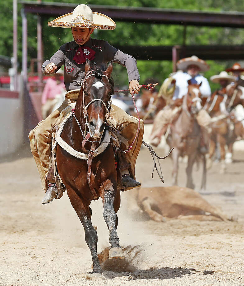Mundo Rios reacts after a successfull coleadero during Fiesta Charreada put on by the San Antonio Charros Association, Sunday, April 28, 2013. Photo: Jerry Lara, San Antonio Express-News / San Antonio Express-News