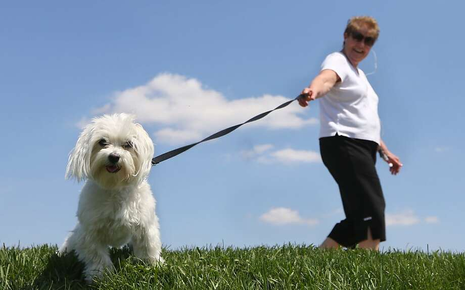 Missy stops to investigate the man with a camera lying on the grass in Dubuque, Iowa. Owner Joyce 