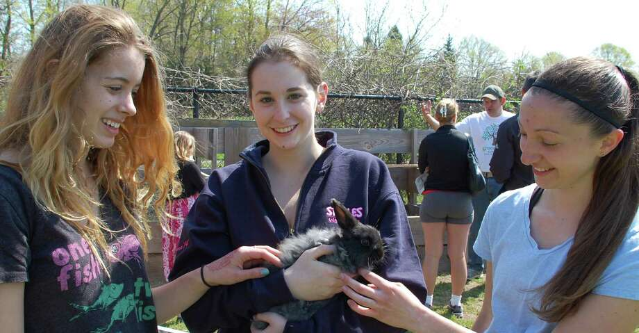 Three Staples High School students enjoyed were among those at Wakeman Town Farm on Sunday, which hosted public activities in conjunction with the townwide Green Day environmental awareness program. They are, from left, Julia Woods, 16; Charlotte Piekara, 16, and Elizabeth Zaffina, 17, with a rabbit named Lily. Photo: Jarret Liotta / Westport News contributed