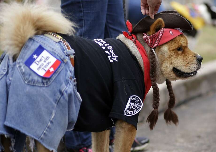 Hail the pigtailed one: Willie Nelson, who is celebrating his 80th birthday this week, also attended the Fiesta Pooch Parade in San Antonio - on all fours. Photo: Eric Gay, Associated Press