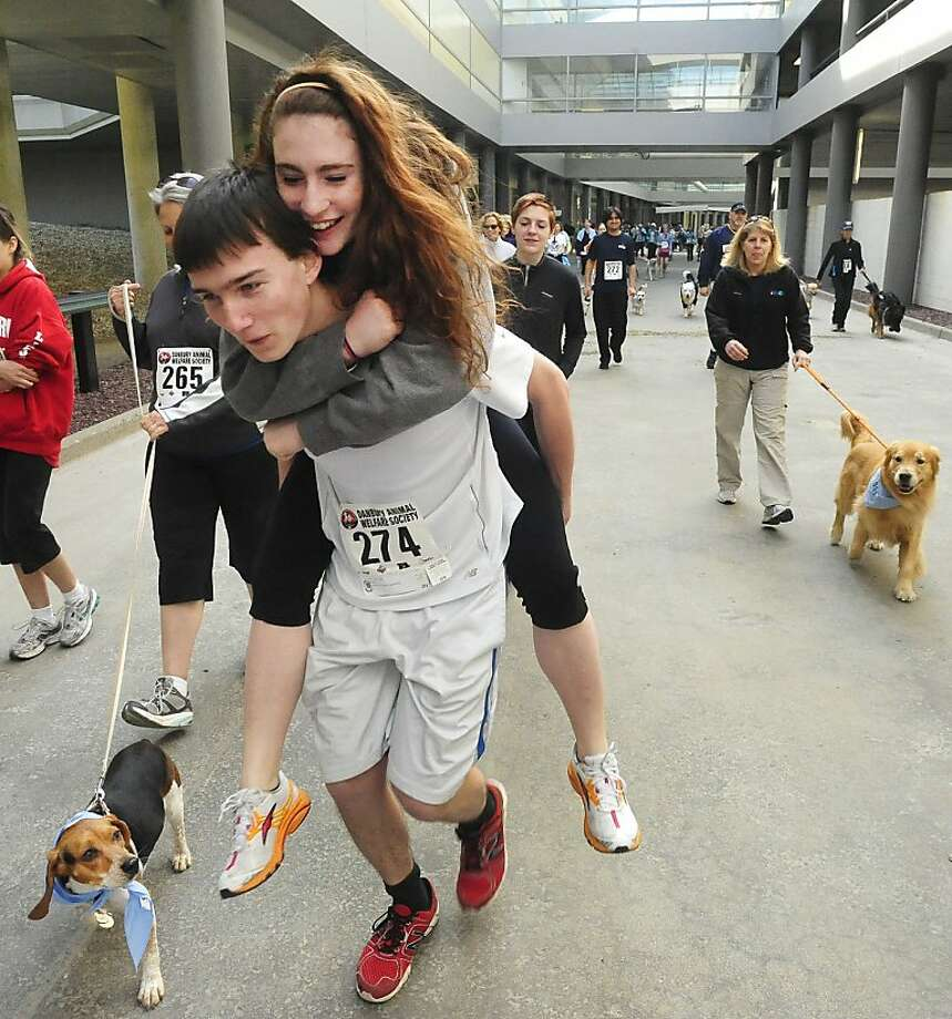 "Hey, no fair carrying her: The Danbury Animal Welfare Society's ""Run Your Tail Off 5K"" requires contestants to run with their dogs, so it's no wonder the beagle is confused. Photo: Michael Duffy, Connecticut Post"