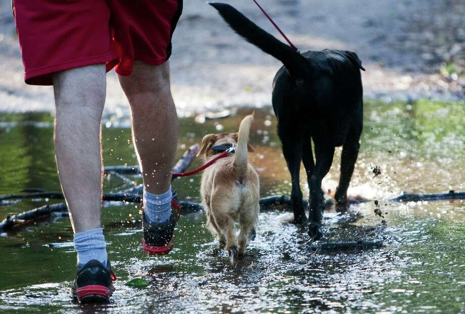 Kraig Junck walks with his two dogs, Scraps and Lissa, through the woods of Memorial Park. Junck is a member of Houston Hash House Harriers. Photo: Cody Duty, Staff / © 2013 Houston Chronicle