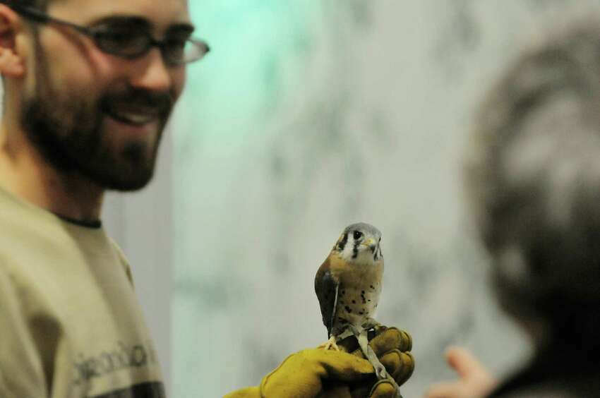 Jonas Borkholder with Adirondack Wildlife Refuge and Rehabilitation Center holds a Kestrel as he talks about the bird to visitors during