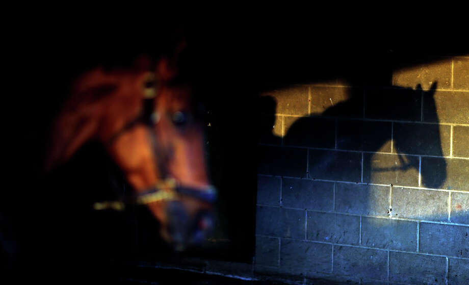 The shadow of a horse names Speed Hoss is seen as it is walked after a morning workout at Churchill Downs Tuesday, April 30, 2013, in Louisville, Ky. Photo: David Goldman, AP / AP