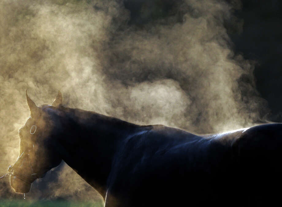 Steam rises of a horse names Strike the Note as it is washed after a morning workout at Churchill Downs Tuesday, April 30, 2013, in Louisville, Ky. Photo: David Goldman, ASSOCIATED PRESS / AP2013
