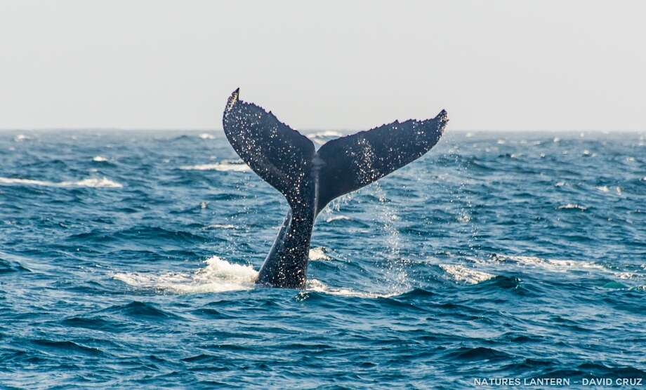 Whale tail dripping with water