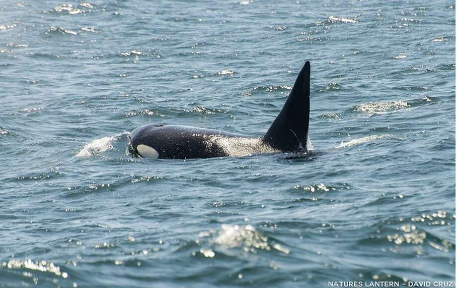 Surprise orca find in Monterey Bay