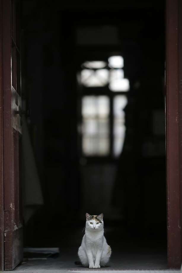After I scratched and meowed, they FINALLY opened the door to let me out. So now I'm just going to sit here:The doorway of a traditional house in Shanghai is blocked. Photo: Eugene Hoshiko, Associated Press