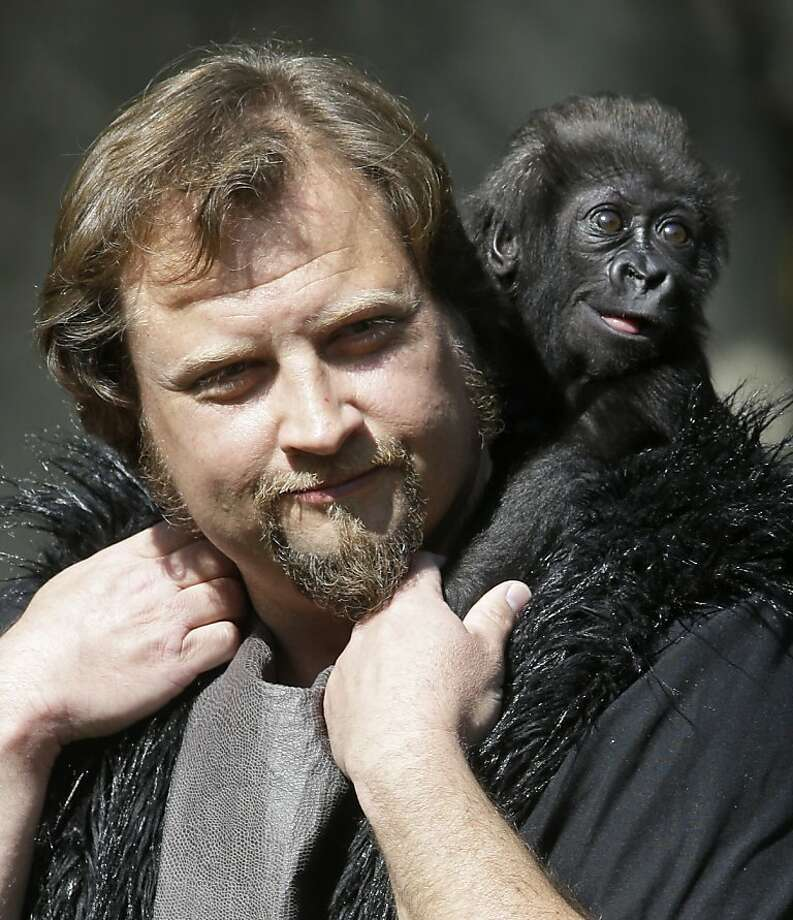 When I grow up, I want a goatee like Daddy. Primate center team leader Ron Evans carries a three-month-old western lowland gorilla named Gladys into the outdoor gorilla exhibit for the first time on Tuesday, April 30, 2013 at the Cincinnati Zoo. Photo: Al Behrman, Associated Press