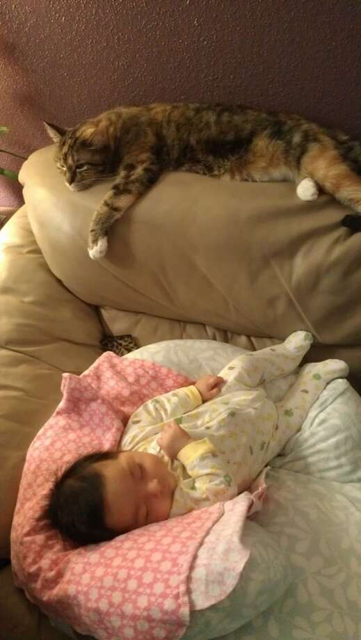 Laurenzo Lavon and his kitty Photo: Picasa