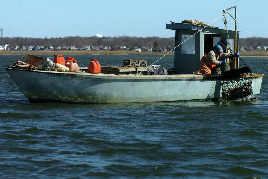 File photo of oystermen hauling a dredge full of oyster and shell on to their boat in the mouth of the Housatonic River in Stratford, Conn.. Photo: Brian A. Pounds