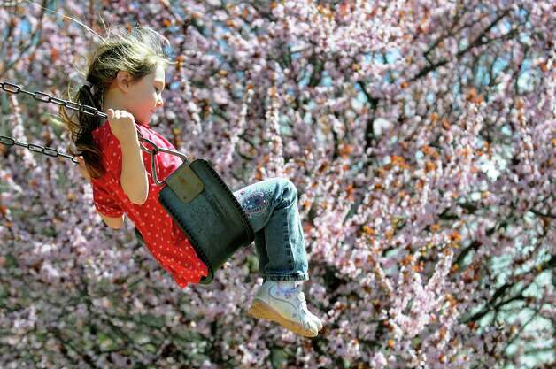 Natalie Ulmer, 5, of Schenectady swings near a flowering crabapple tree on Tuesday, April 30, 2013, outside Bethlehem Town Hall in Delmar. (Cindy Schultz / Times Union) Photo: Cindy Schultz