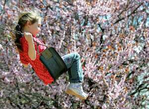 Natalie Ulmer, 5, of Schenectady swings near a flowering crabapple tree on Tuesday, April 30, 2013, outside Bethlehem Town Hall in Delmar. (Cindy Schultz / Times Union)