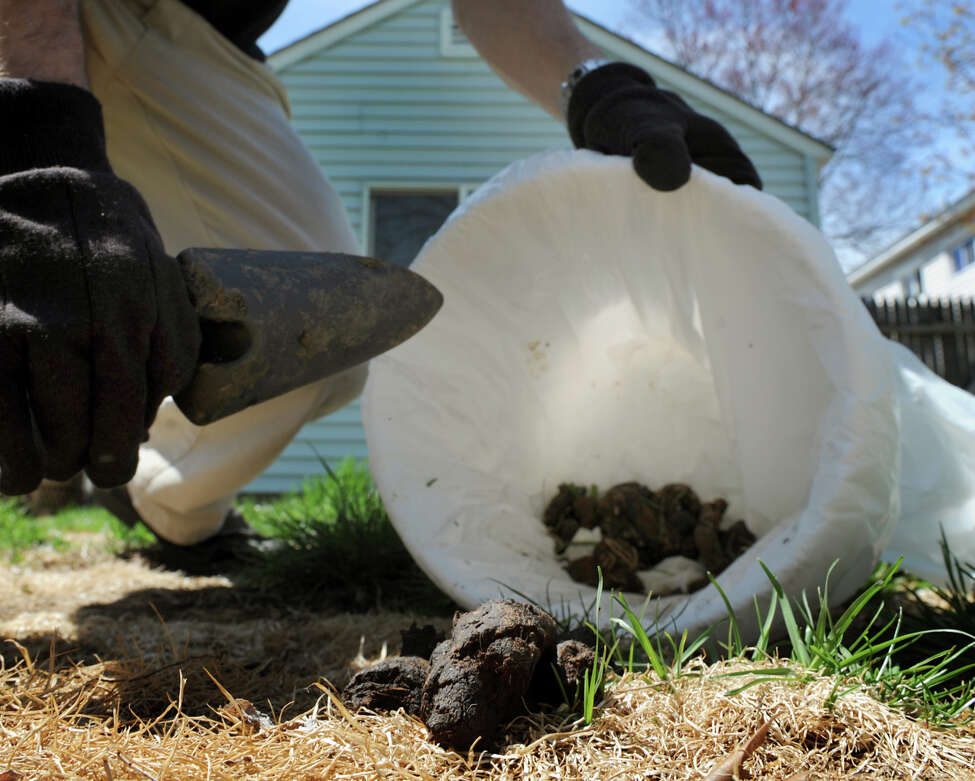 Jonathon Locke, owner of Diddly-Squat, scoops up pet waste on Tuesday, April 30, 2013, at a client's home in Rotterdam, N.Y (Cindy Schultz / Times Union)