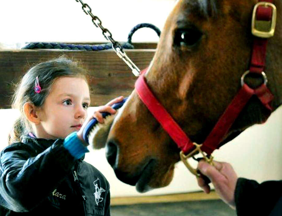 Clara D'Amico, 6, brushes a pony named Peggy at Trowbridge Farm in Bridgewater as part of Region 12's Horses Tales Literacy Project. April 2013 Photo: Michael Duffy