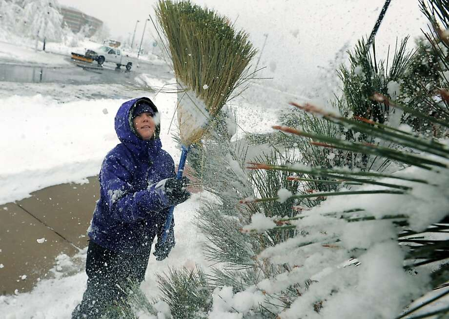 Rocky Mountain sigh: Instead of circling the maypole, horticulturist Kelly Scholl spends May Day sweeping snow out of the trees at Gardens at Spring Creek in Fort Collins, Colo. Photo: Rich Abrahamson, Associated Press