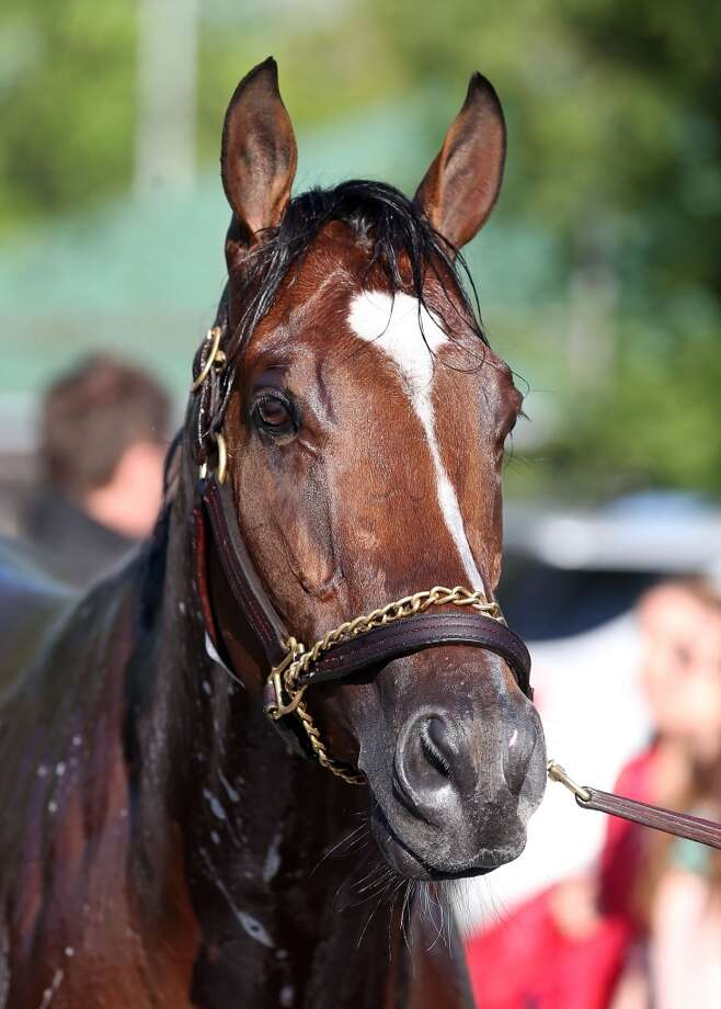 8. Goldencents (Kevin Krigger) — Doug O'Neill  The horse is part-owned by Louisville men's basketball coach Rick Pitino.