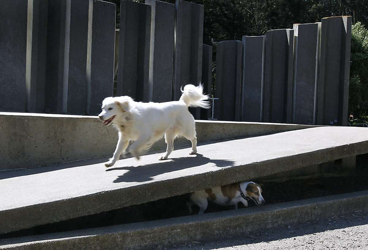 Grady (left) and Snickers frolic on the stage of the Jerry Garcia Amphitheater at McLaren Park in San Francisco, Calif. on Wednesday, May 1, 2013. Talks are underway with a Southern California nonprofit to renovate the theater but neighbors aren't happy with a proposed name change that goes with it.