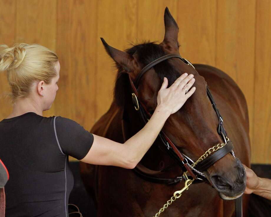 Kentucky Derby hopeful Orb gets his head rubbed by exercise rider Jennifer Patterson as he stands in the schooling stall in the paddock at Churchill Downs Tuesday, April 30, 2013 in Louisville, Ky. (AP Photo/Garry Jones) Photo: Garry Jones, Associated Press / FR50389 AP