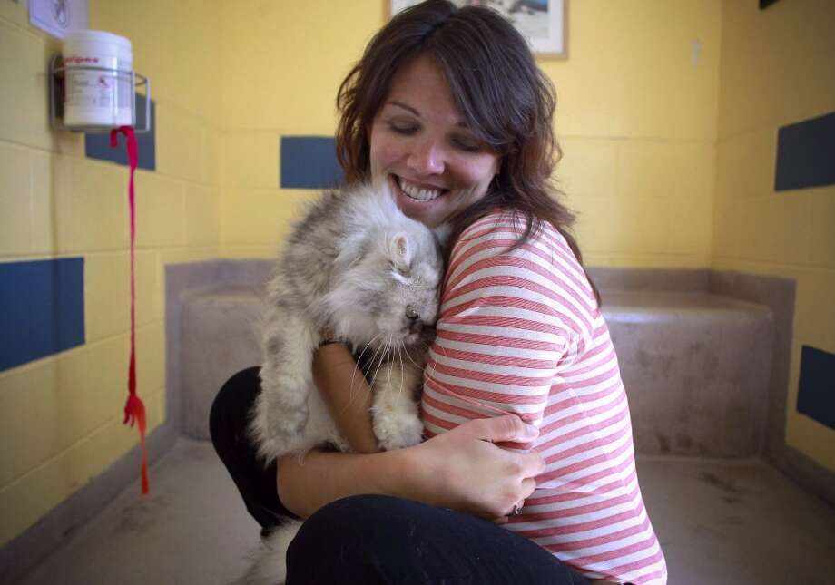 "The executive editor of The Great Wall of Oakland, organizers of the festival, Issabella Shields cuddles ""Magnolia' a Persian cross adult cat, at the East Bay SPCA in Oakland, Calif. on Thursday April 25, 2013. Organizers with the group, The Great Wall of Oakland are putting together a Cat Video Festival, an art and cat extravaganza on Saturday May 11, 2013,  benefitting the East Bay SPCA.  Cat videos will also be projected onto a one hundred foot wall."