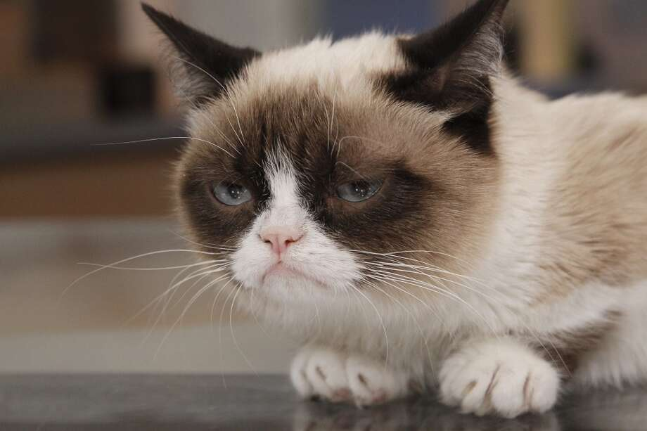"Internet sensation Grumpy Cat appears on ""Good Morning America."""