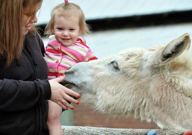 Heather Violette of Albany and 16-month-old daughter Ella pet a donkey at Indian Ladder Farms in Altamont during its 17th annual Baby Animal Days, Saturday May 5, 2012.   (John Carl D'Annibale / Times Union) Photo: John Carl D'Annibale / 00017375A