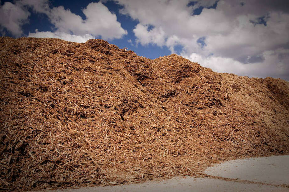 Mesquite wood chips are piled up and reading for loading on property about 40 miles from Corpus Christi. A Czech Republic company, GreenHeart Energy LLC, based in San Antonio, will begin harvesting mesquite near Corpus Christi to ship to European utilities to burn at electric power plants.
