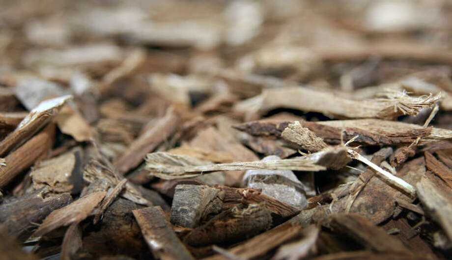A close-up shot of mesquite wood is shown. A Czech Republic company, GreenHeart Energy LLC, based in San Antonio, will begin harvesting mesquite near Corpus Christi to ship to European utilities to burn at electric power plants.