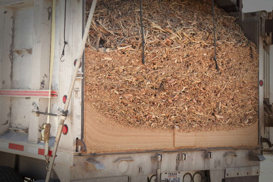 Mesquite wood chips are shown in a truck loaded about 40 miles from Corpus Christi. A Czech Republic company, GreenHeart Energy LLC, based in San Antonio, will begin harvesting mesquite near Corpus Christi to ship to European utilities to burn at electric power plants.