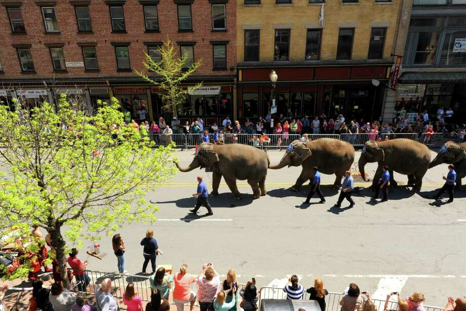 Ringling Bros. and Barnum & Bailey circus elephants parade down Pearl Street on Thursday  May 2, 2013 in Albany, N.Y. (Michael P. Farrell/Times Union) Photo: Michael P. Farrell